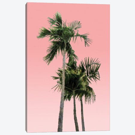 Palm Trees on Pink Wall Canvas Print #AII89} by amini54 Canvas Artwork
