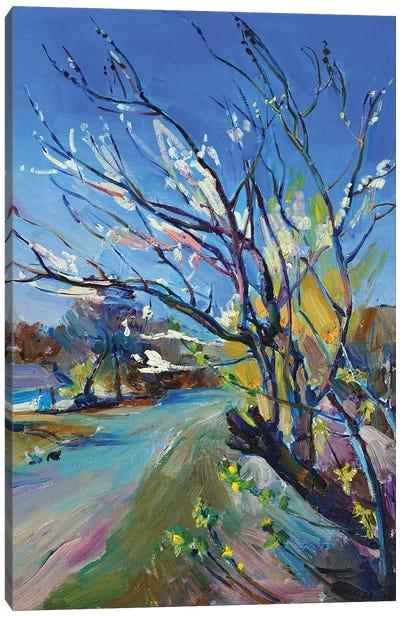 Spring Flowering Of Trees Canvas Art Print