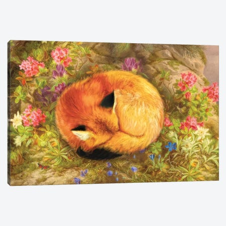 The Cozy Fox Canvas Print #AIM62} by Aimee Stewart Canvas Artwork