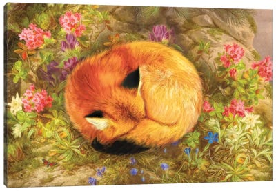 The Cozy Fox Canvas Art Print