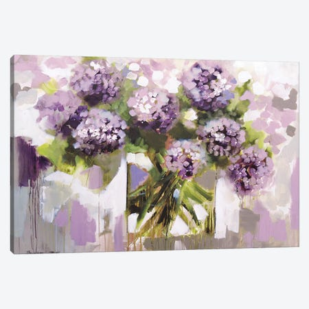 Blush Hydrangea Canvas Print #AJB21} by Amanda J. Brooks Canvas Print