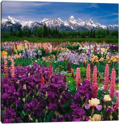 Iris & Lupine Field, Grand Teton National Park, Teton County, Wyoming, USA Canvas Art Print