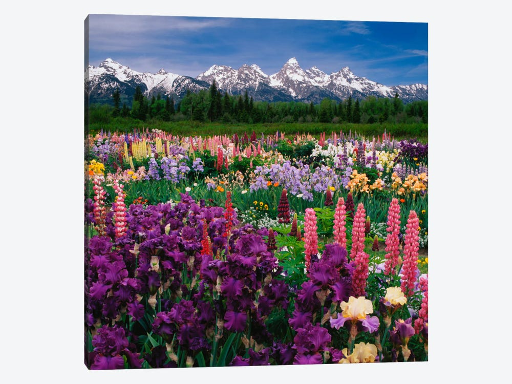 Iris & Lupine Field, Grand Teton National Park, Teton County, Wyoming, USA by Adam Jones 1-piece Canvas Wall Art