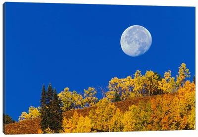 Autumn Moon At Sunrise, Gunnison National Forest, Colorado, USA Canvas Art Print