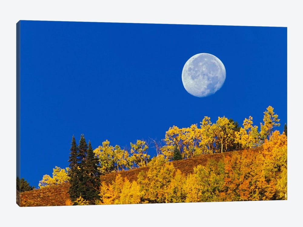 Autumn Moon At Sunrise, Gunnison National Forest, Colorado, USA by Adam Jones 1-piece Art Print