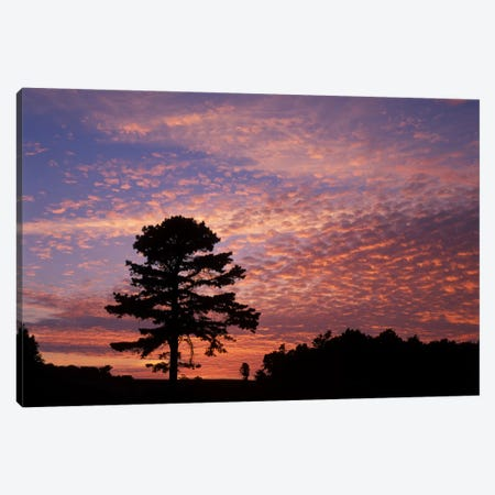 Pine Tree Silhouette At Sunrise, Cumberland Gap National Historic Park, Kentucky, USA Canvas Print #AJO14} by Adam Jones Canvas Wall Art