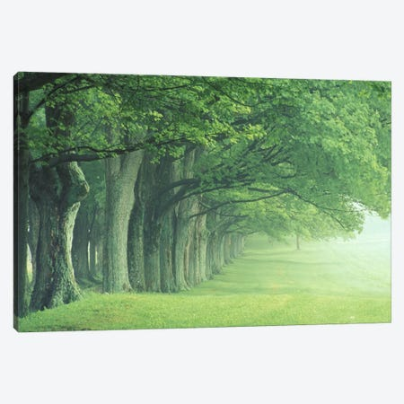 Stately Row Of Trees, Kentucky, USA Canvas Print #AJO15} by Adam Jones Canvas Art