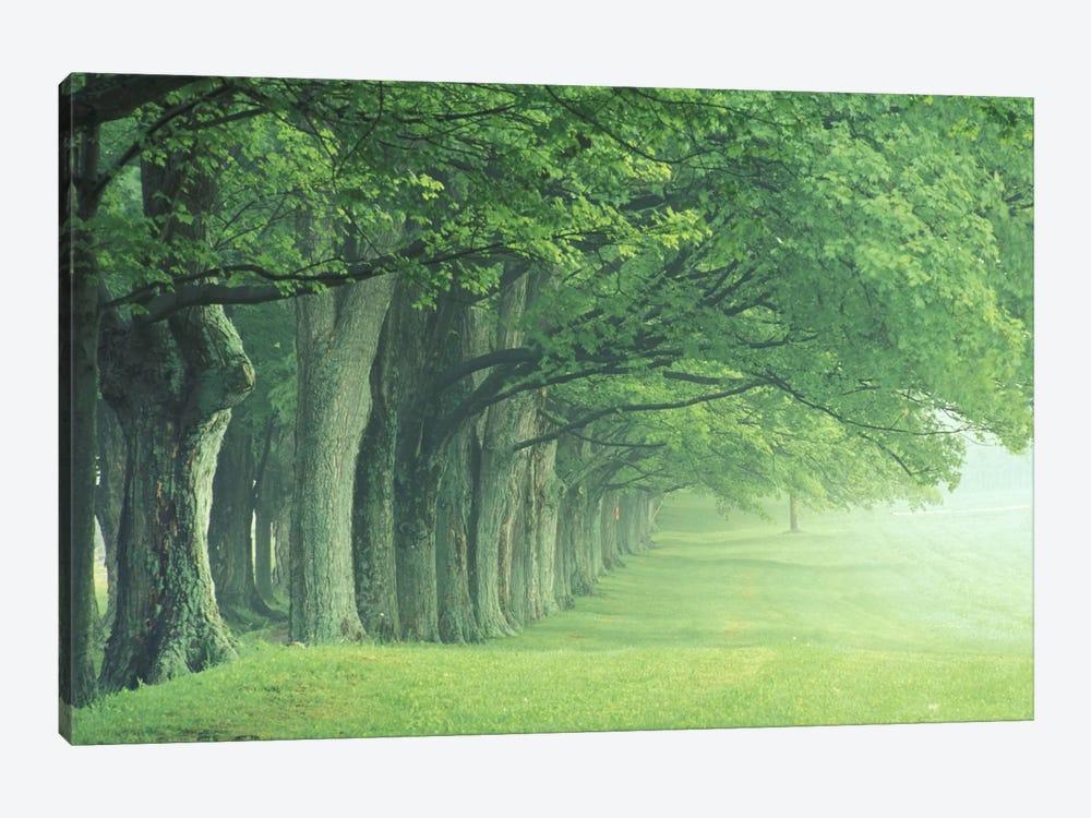 Stately Row Of Trees, Kentucky, USA by Adam Jones 1-piece Canvas Print
