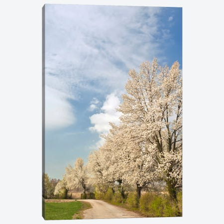 Crabapple Trees With White Blooms, Louisville, Jefferson County, Kentucky, USA Canvas Print #AJO20} by Adam Jones Canvas Wall Art