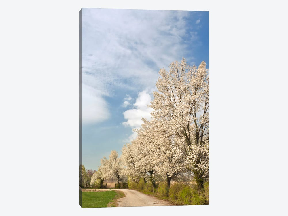 Crabapple Trees With White Blooms, Louisville, Jefferson County, Kentucky, USA by Adam Jones 1-piece Art Print