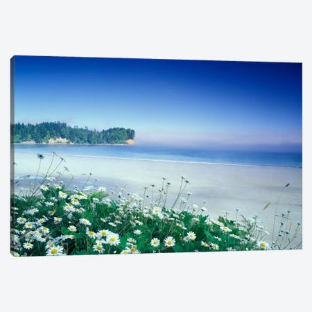 Crescent Beach With Daisies In The Foreground, Port Angeles, Washington, USA Canvas Print #AJO28} by Adam Jones Canvas Artwork