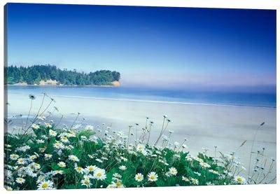 Crescent Beach With Daisies In The Foreground, Port Angeles, Washington, USA Canvas Art Print