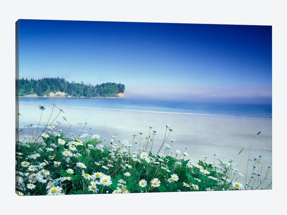 Crescent Beach With Daisies In The Foreground, Port Angeles, Washington, USA by Adam Jones 1-piece Canvas Print