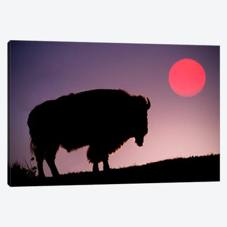 Bison (American Buffalo) Silhouette At Sunrise, Yellowstone National Park, Wyoming, USA Canvas Print #AJO30} by Adam Jones Canvas Art Print