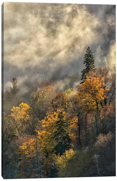 Autumn Colors And Mist At Sunrise, Blue Ridge Mountains At Sunrise, North Carolina Canvas Art Print