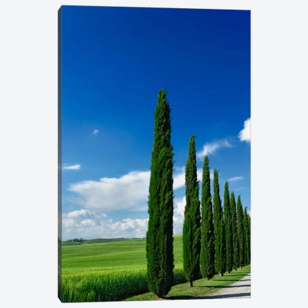 Line Of Cypress Trees, Tuscany Region, Italy Canvas Print #AJO5} by Adam Jones Canvas Art