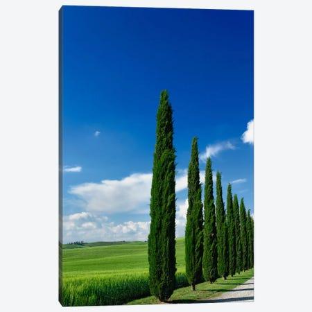 Line Of Cypress Trees, Tuscany Region, Italy Canvas Print #AJO5} by Adam Jones Canvas Art