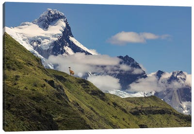 Guanaco on steep slope, Torres del Paine National Park, Chile, Patagonia, Patagonia Canvas Art Print