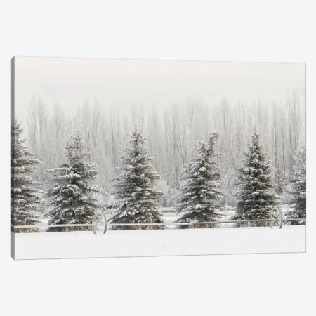 Heavy frost on trees, Kalispell, Montana Canvas Print #AJO65} by Adam Jones Canvas Art Print