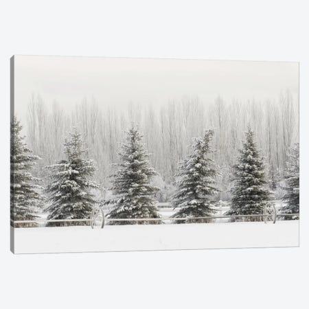 Heavy frost on trees, Kalispell, Montana Canvas Print #AJO65} by Adam Jones Canvas Art Print