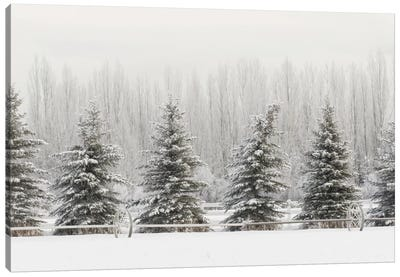 Heavy frost on trees, Kalispell, Montana Canvas Art Print