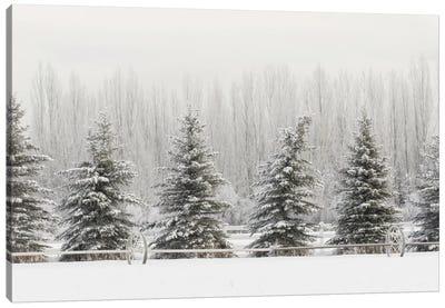 Heavy frost on trees, Kalispell, Montana Canvas Art Print
