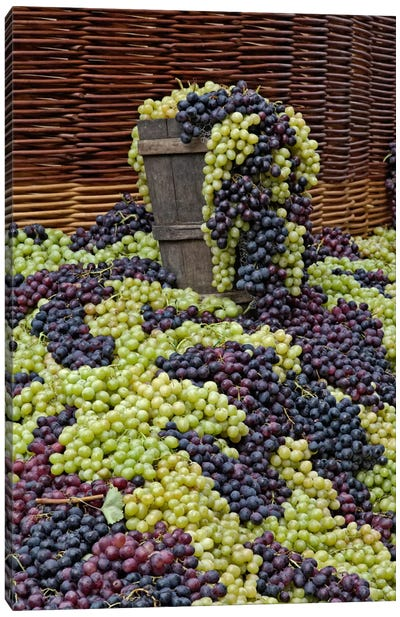 Grape Harvest, Festa dell'Uva, Impruneta, Florence Province, Tuscany Region, Italy Canvas Art Print