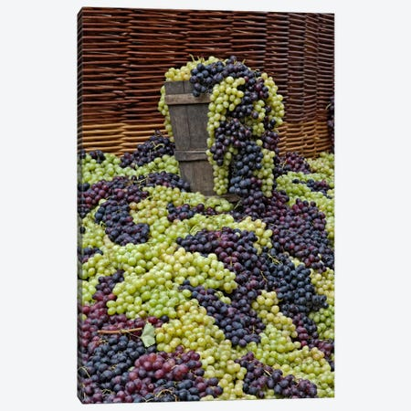 Grape Harvest, Festa dell'Uva, Impruneta, Florence Province, Tuscany Region, Italy Canvas Print #AJO6} by Adam Jones Canvas Wall Art