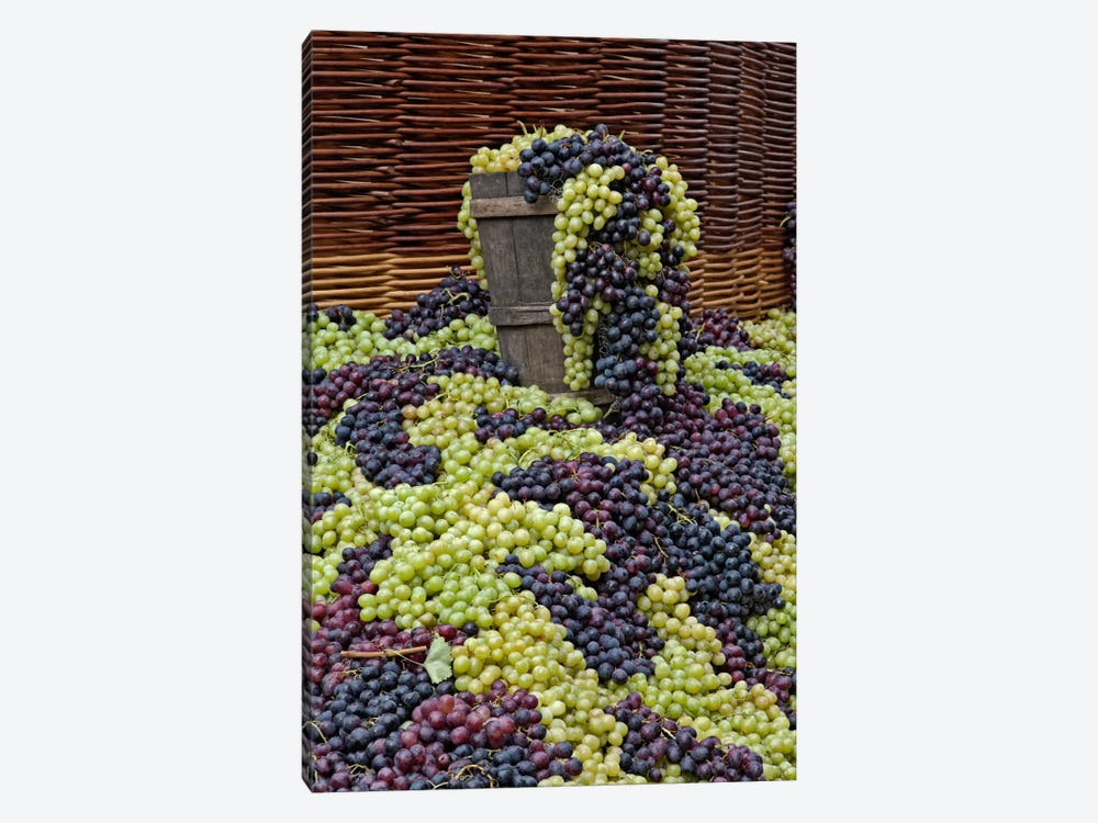Grape Harvest, Festa dell'Uva, Impruneta, Florence Province, Tuscany Region, Italy by Adam Jones 1-piece Canvas Artwork