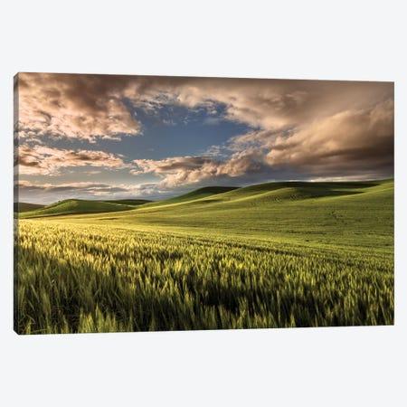 Rolling hills of wheat at sunrise, Palouse region, Washington State. Canvas Print #AJO79} by Adam Jones Canvas Art Print