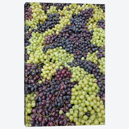 Grape Harvest In Zoom I, Festa dell'Uva, Impruneta, Florence Province, Tuscany Region, Italy Canvas Print #AJO7} by Adam Jones Canvas Wall Art