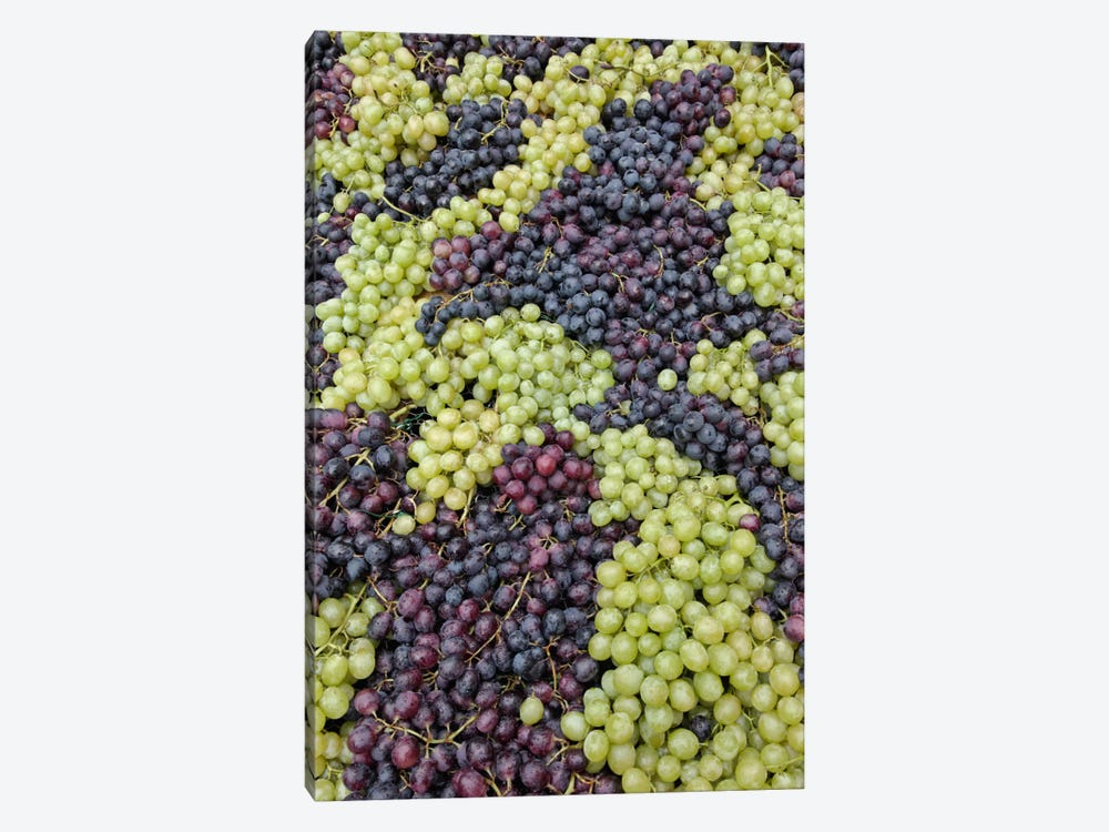 Grape Harvest In Zoom I, Festa dell'Uva, Impruneta, Florence Province, Tuscany Region, Italy by Adam Jones 1-piece Art Print