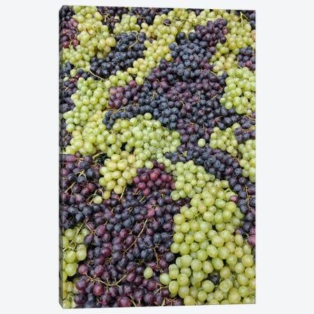 Grape Harvest In Zoom I, Festa dell'Uva, Impruneta, Florence Province, Tuscany Region, Italy Canvas Print #AJO7} by Adam Jones Canvas Wall Art