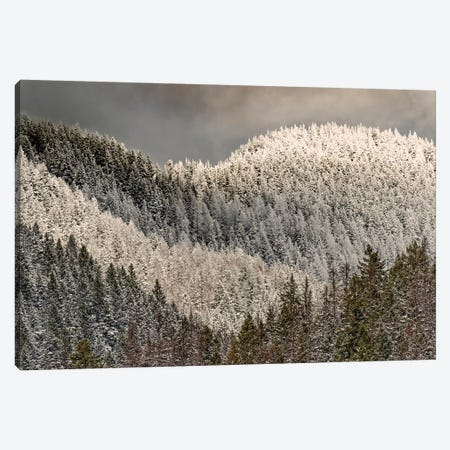 Snow-covered trees on mountain. Canvas Print #AJO80} by Adam Jones Canvas Wall Art