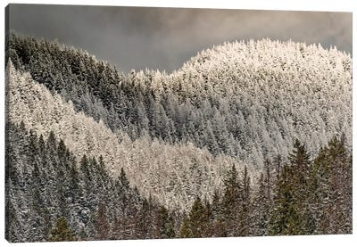 Snow-covered trees on mountain. Canvas Art Print