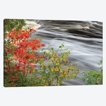 Tahquamenon Falls, Tahquamenon Falls State Park, Michigan Canvas Print #AJO82} by Adam Jones Canvas Wall Art