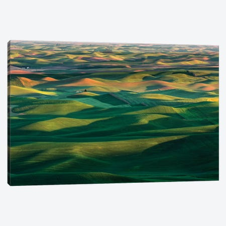 Undulating wheat crop, Palouse region, Washington State. Canvas Print #AJO86} by Adam Jones Canvas Print