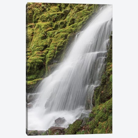 White Branch Falls, Oregon Cascades, Oregon I Canvas Print #AJO87} by Adam Jones Canvas Art Print