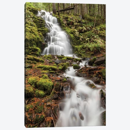 White Branch Falls, Oregon Cascades, Oregon II Canvas Print #AJO88} by Adam Jones Canvas Wall Art