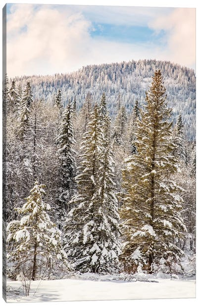 Winter mountain scene, Montana Canvas Art Print