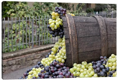 Grape Harvest In Zoom II, Festa dell'Uva, Impruneta, Florence Province, Tuscany Region, Italy Canvas Art Print