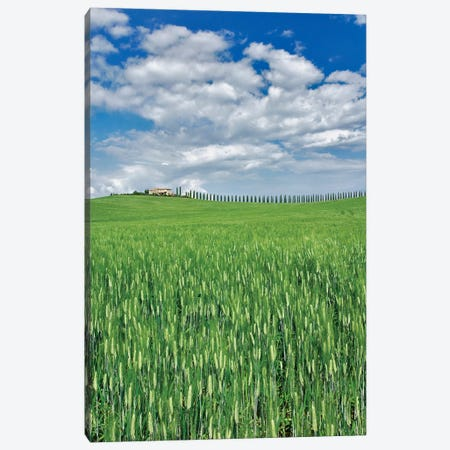Wheat Field And Drive Lined By Stately Cypress Trees, Tuscany, Italy. Canvas Print #AJO90} by Adam Jones Canvas Print
