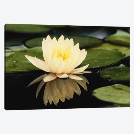 Domestic Water Lily, Louisville, Kentucky, USA 3-Piece Canvas #AJO9} by Adam Jones Canvas Art Print