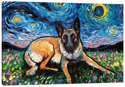 Belgian Malinois Night Canvas Art Print