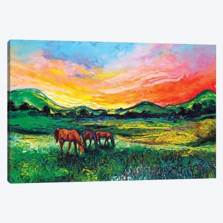 Meadow Sunset Canvas Print #AJT213} by Aja Trier Canvas Artwork
