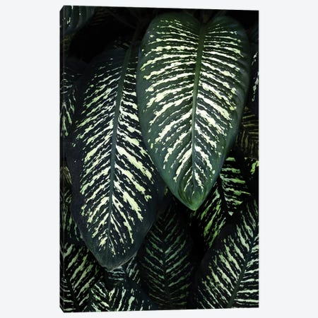 Jungle I Canvas Print #AKB17} by Amy & Kurt Berlin Canvas Wall Art