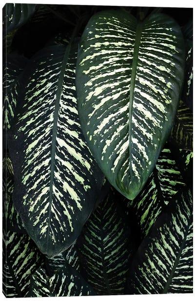 Jungle I Canvas Art Print