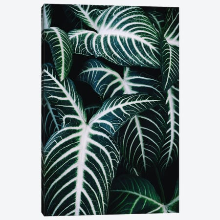Jungle II Canvas Print #AKB18} by Amy & Kurt Berlin Canvas Print