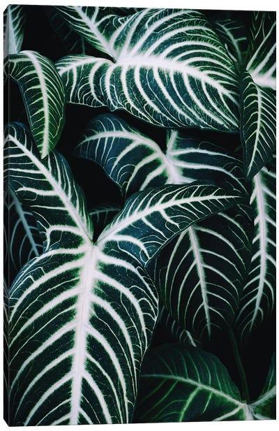 Jungle II Canvas Art Print