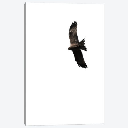 Buzzard Canvas Print #AKB8} by Amy & Kurt Berlin Canvas Print